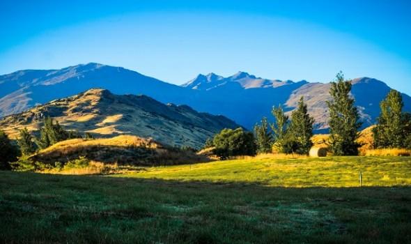 Migrant Voice - Latest New Zealand statistics