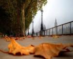 Migrant Voice - October
