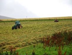 Migrant Voice - Cornwall farmers plea for labour as produce sits rotting in fields